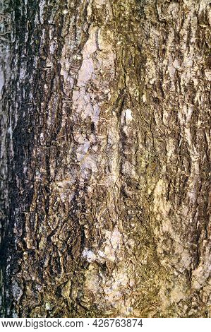 Texture Of Aged Rough Tree Bark For Abstract Background