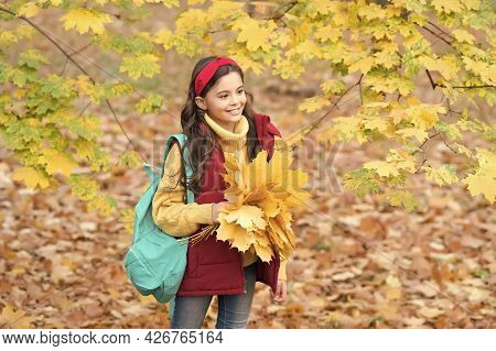 Happy Kid In Casual Style Spend Time Gathering Fallen Maple Leaves In Autumn Park Enjoying Good Weat