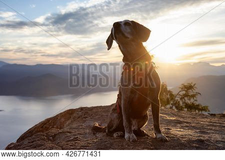 Adventurous Little Hiking Dog On Top Of A Mountain With Scenic Canadian Nature Landscape In Backgrou