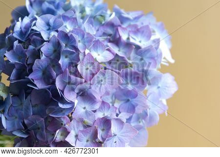 Abstract Beautiful Blue Hydrangea Blooming Flowers Background. Flower Texture Backgrounds