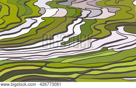 Terraced Rice Paddy Field Landscape Color Vector