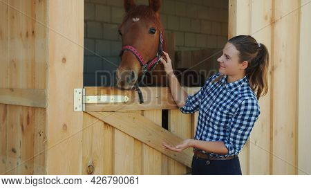 Female Horse Owner Feeding Her Dark Bay Horse Out Of Her Hand. Patting Her Horse And Looking At It W
