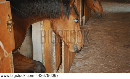 A Dark Brown Blind Horse In The Stall. View From Inside The Horse Stable With Rows Of Stalls For Eac