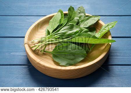 Broadleaf Plantain Leaves On Blue Wooden Table