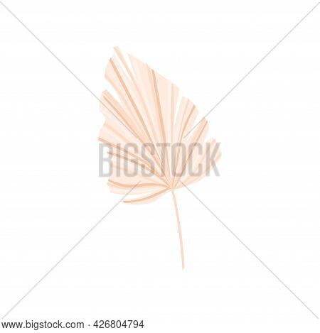 Dry Palm Leaf On A White Background. For The Decoration Of Invitations, Flyers, Postcards. Vector Il