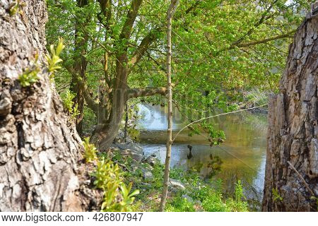 Sunny Spring Landscape. Trees At Riverbank. At The River Enz In Oberriexingen, South Germany