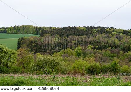 Mixed Forest In Different Green Shades In Spring Landscape In Swabian Alb On A Rainy Day