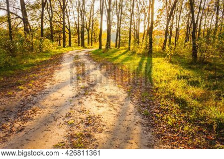 Path Road Way Pathway With Trees On Sunny Day In Autumn Yellow Forest. Sunbeams Pour Through Trees I