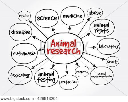 Animal Research Mind Map, Concept For Presentations And Reports