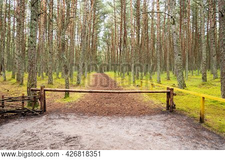 An Old Wooden Barrier In A Field Against The Background Of A Green Forest With A Road.