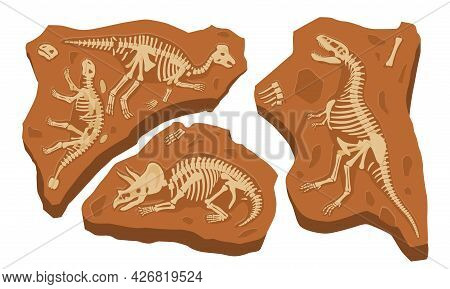 Paleontology Finds Concept. Fossil Dinosaurs Skeletons. Stones With Bones Of Prehistoric Reptiles. S