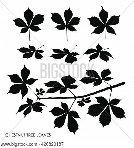 Black Silhouettes Of Chestnut Tree Leaves Isolated On White. Autumn Fallen Leaves Of Chestnut Tree.