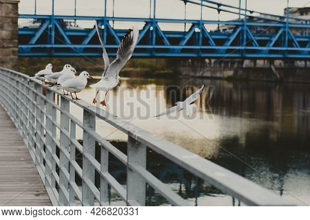 Seagulls On Waterfront Barrier Ready To Fly Away. Seagulls Flying Against Bridge In City. Horizontal