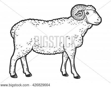 Farm Animal, Ram. Side View. Sketch Scratch Board Imitation Coloring.