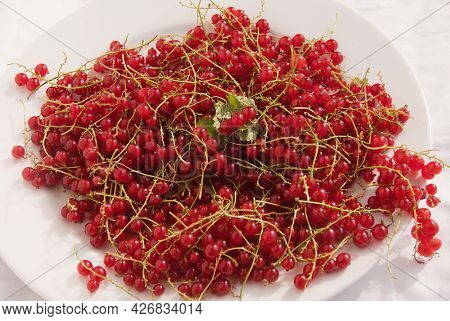 Ripe Organic, Juicy Fresh Red Currants On White Plate, Close-up, On A White Background. Healthy Nour