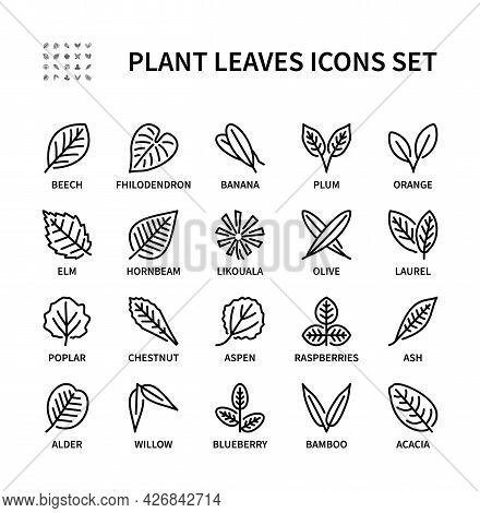 Leaves Of Different Plants Vector Linear Icon Set. Isolated Icon Collection Of Leaves On White Backg