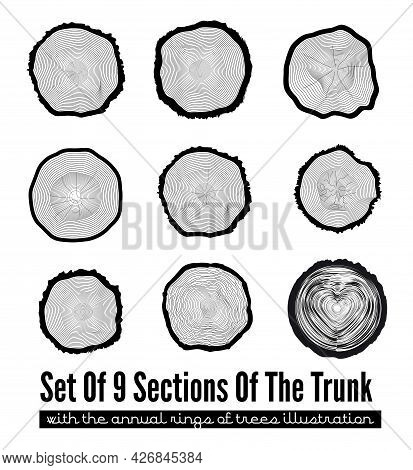 Set Of 9 Cross Section Of The Trunk With Tree Rings, Vector Illustration