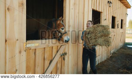Female Horse Owner Carrying A Hay Bundle For Her Horse. A Dark Brown Horse Taking Out Its Head From