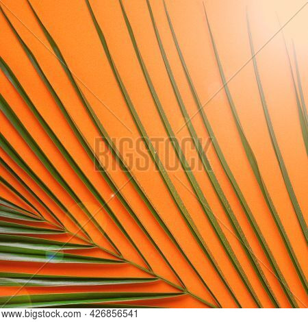 Orange Background With Palm Leaf And Sunbeam. Minimalist Summer Backdrop
