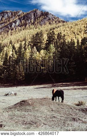 Horses graze in the foothills of the Altai Republic, Russia.