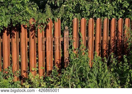 Part Of A Red Metal Fence Wall Overgrown With Green Vegetation On The Street