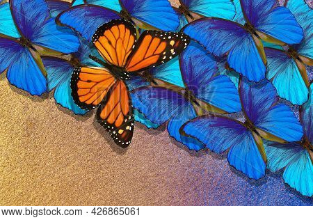 Abstract Background Of Colorful Butterflies. Bright Blue Morpho Butterflies And Colorful Orange Mona
