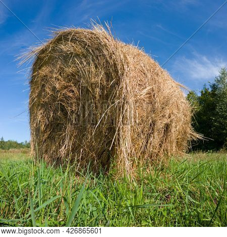 Single Hay Roll Bale In Field Against Forest During Sunny Summer Day, Cattle Fodder Over Winter Time