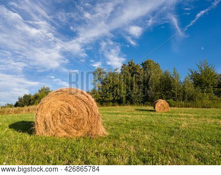 Hay Roll Bales In Field Against Grove During Sunny Summer Day With Cirrus Clouds In Sky, Cattle Fodd
