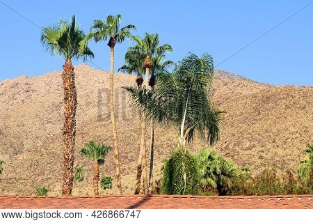 Palm Trees Surrounding A Building Including A Spanish Colonial Architectural Design With Arid Mounta