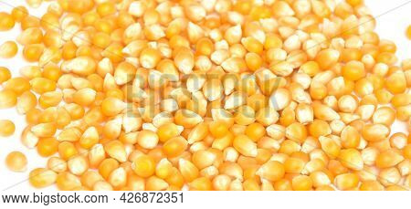 Background Of Yellow Maize Corn Kernels Ready For Making Pop Corn