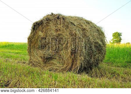A Stack Of Fresh Hay Rolled Into A Cylinder Lies On The Field On A Sunny Summer Day. Household.