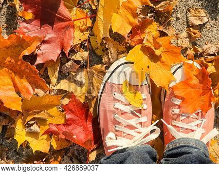 Feet In Sneakers Standing In A Heap Of Dry Orange And Yellow Autumn Leaves. Sunny Warm Autumn Backgr