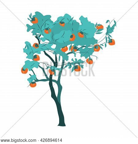 Persimmon Tree With Orange Fruits For Korean Thanksgiving Or Chuseok. Oriental Plant For Garden And