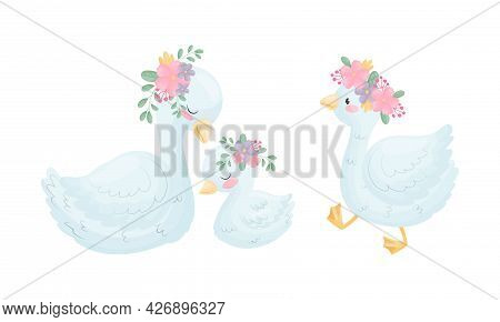 Beautiful White Swan Or Goose With Floral Arrangement Vector Set