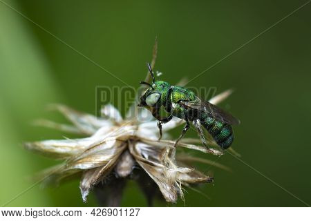 Strange Creature.  This Insect Look Like Steep.