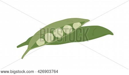 Open And Closed Peas Pods With Ripe Green Beans. Composition Of Organic Vegetable With Seeds. Fresh