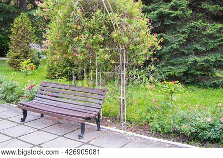 An Old Wooden Bench Near A Trellis Covered With Flowers, A Spring Park, A Selective Focus
