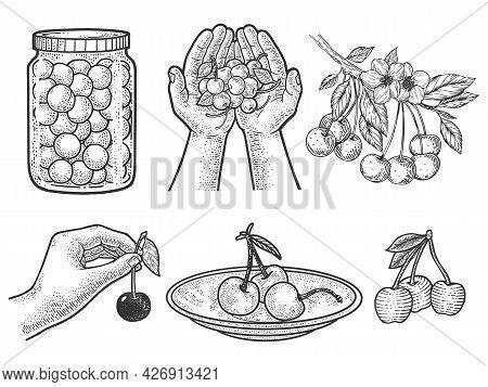 Cherry Berry Set Collection Line Art Sketch Engraving Vector Illustration. T-shirt Apparel Print Des