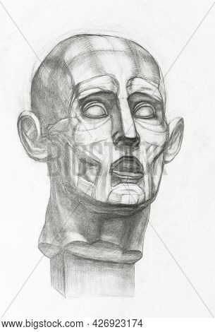 Academic Drawing - Sketch Of Gypsum Anatomical Ecorche Head Hand-drawn By Graphite Pencil On White P