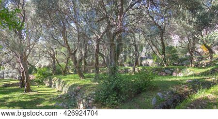 The Park Next To The Sveti Stefan Island. Montenegro.