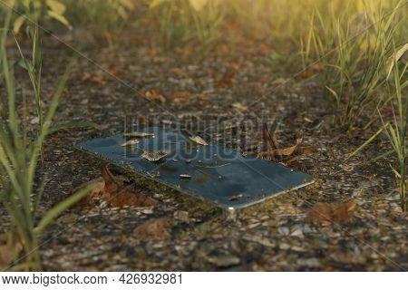 3d Rendering Of Discarded Moss-covered Smartphone Laying At Meadow Field