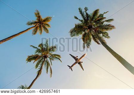Passenger Airplane Flying Above The Palm Trees Against The Blue Sky.beautiful Coconut Palm Tree View