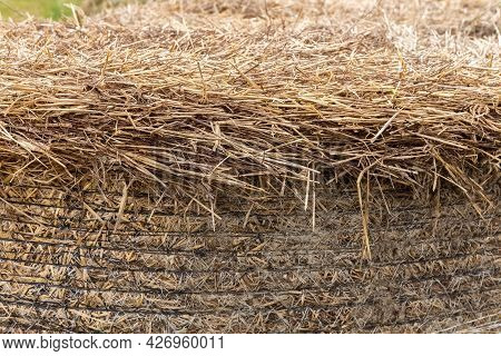 Hay Close-up. Hay Texture. Background. Dry Grass. Animal Nutrition Concept. Animal Nutrition Concept