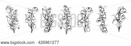 Hand-drawn Set With Lily Of The Valley Flowers, Primroses . Realistic Element In Black, White. Botan