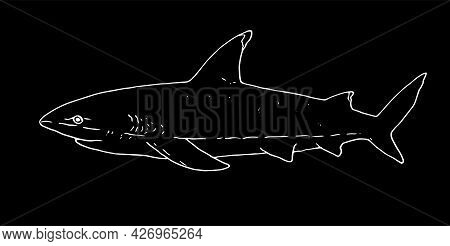 The White Outline Of A Shark. Hand-drawn In A Sketch Of A Fish-shark Side View. Vector Illustration