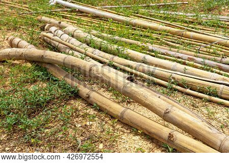 A Pile Of Bamboo Laying Used To Support Vegetable Gardening In Rural Area,  A Pile Of Old Bamboo Pie
