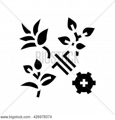 Breeding Varieties Of Tea Glyph Icon Vector. Breeding Varieties Of Tea Sign. Isolated Contour Symbol
