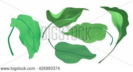 Set Of Tropical Leaves On White Background. Plant Leaf Botanical Garden Floral Foliage. Fresh Beauty