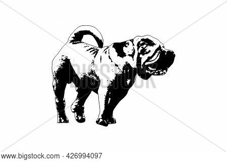 Black And White Full-length Portrait Of Dog With Tail.  Adult Male Modern Meat-mouth Shar Pei. Vecto