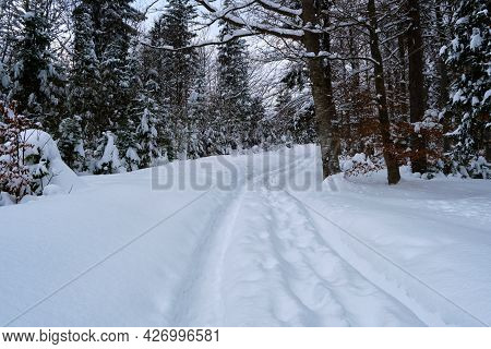 Moody Landscape With Footpath Tracks And Pine Trees Covered With Fresh Fallen Snow In Winter Mountai